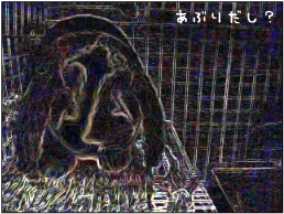f0196660_23564016.jpg