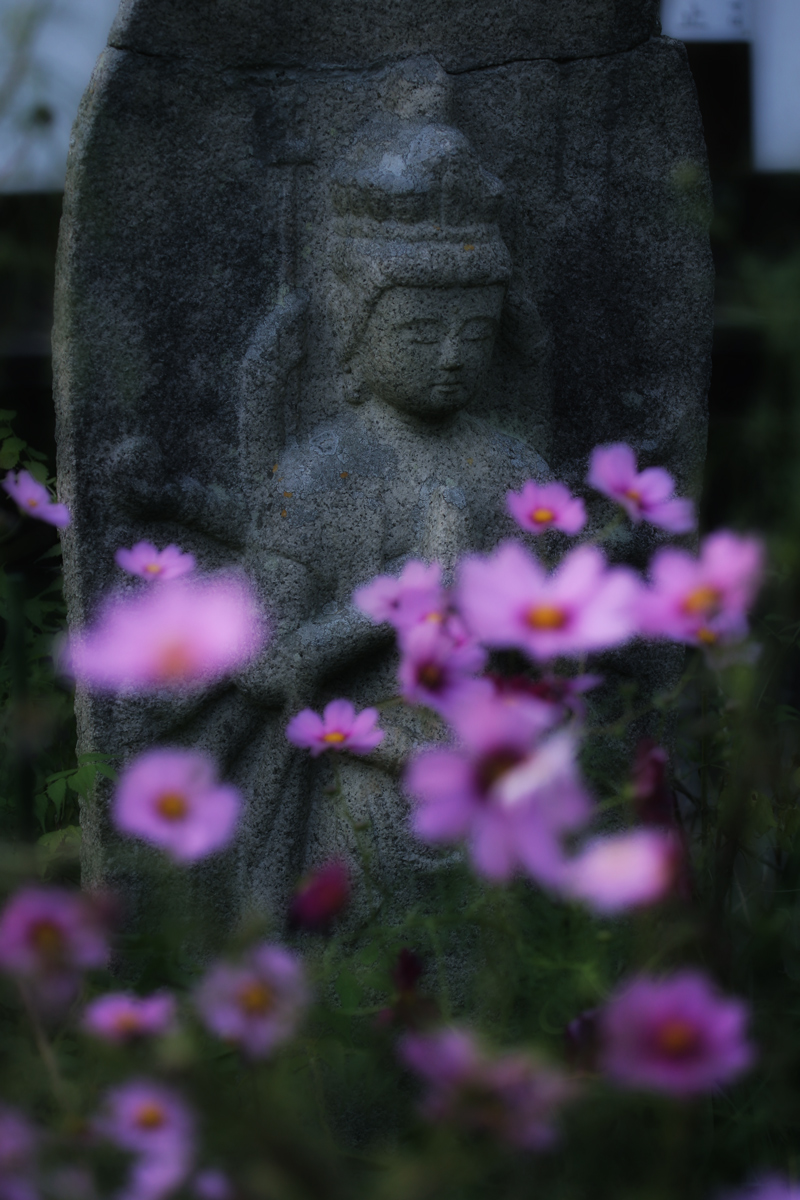 奈良 般若寺 秋桜 4_f0021869_2341482.jpg