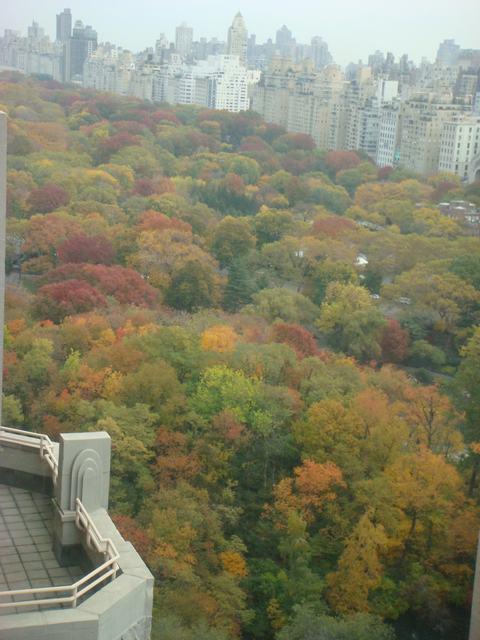 セントラルパークは黄色い森となり、_d0100880_5193169.jpg