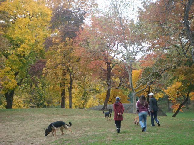 セントラルパークは黄色い森となり、_d0100880_5195682.jpg