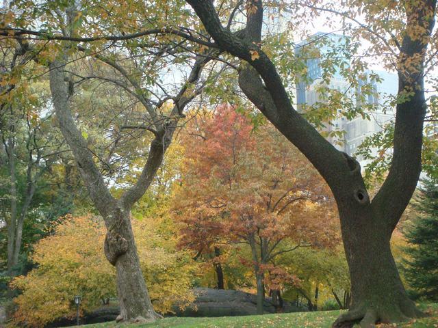 セントラルパークは黄色い森となり、_d0100880_5202684.jpg