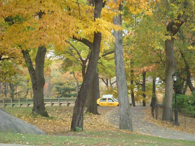 セントラルパークは黄色い森となり、_d0100880_5204819.jpg