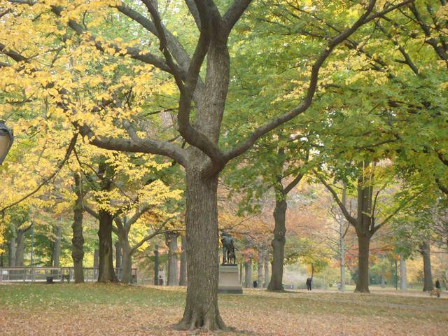 セントラルパークは黄色い森となり、_d0100880_5233764.jpg