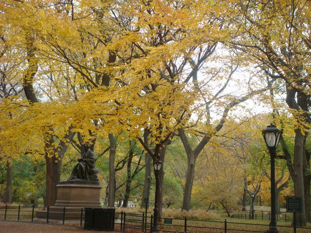 セントラルパークは黄色い森となり、_d0100880_52405.jpg