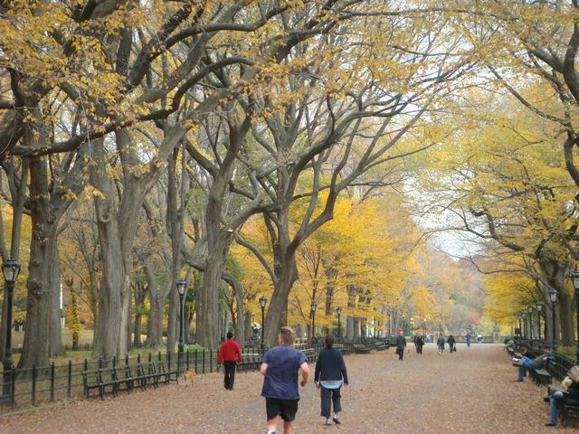 セントラルパークは黄色い森となり、_d0100880_526224.jpg