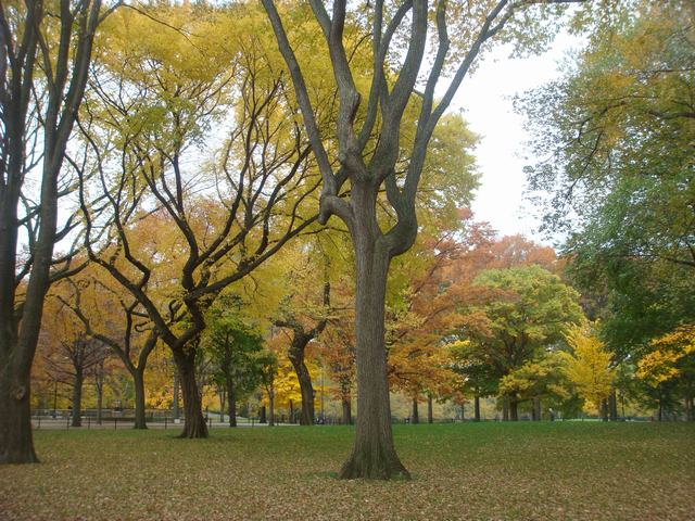 セントラルパークは黄色い森となり、_d0100880_5264952.jpg