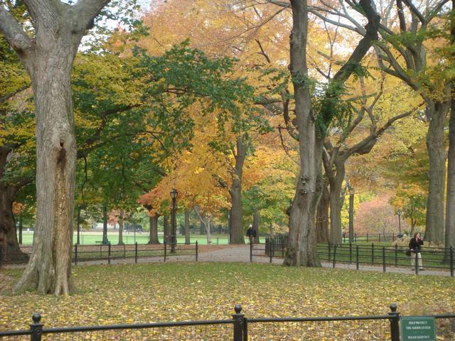 セントラルパークは黄色い森となり、_d0100880_526944.jpg