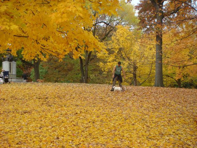 セントラルパークは黄色い森となり、_d0100880_5272830.jpg