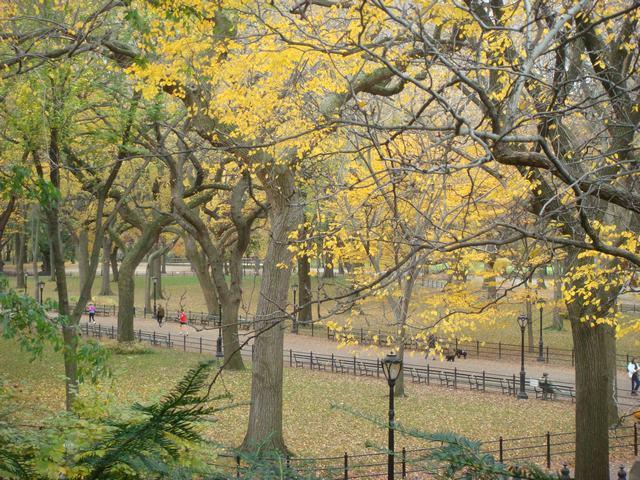 セントラルパークは黄色い森となり、_d0100880_52732.jpg