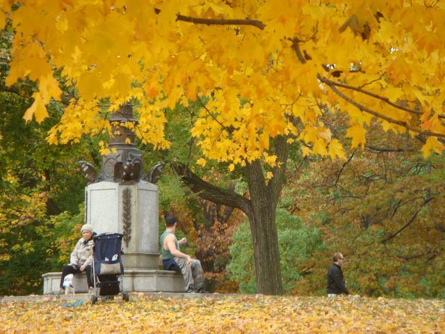 セントラルパークは黄色い森となり、_d0100880_528152.jpg
