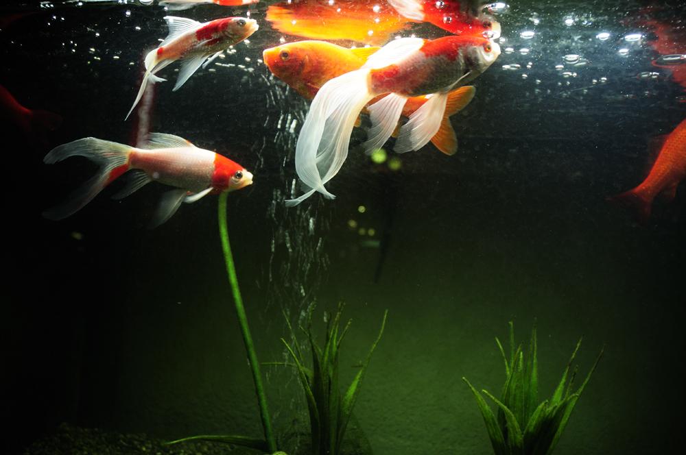 fish_f0144394_1833175.jpg