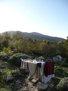 11月の畑~ソラマメを蒔きました_f0106597_120268.jpg