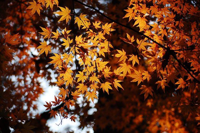 黄金色の秋_d0151003_1541044.jpg