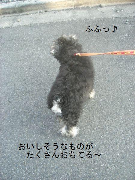 f0197317_1631596.jpg