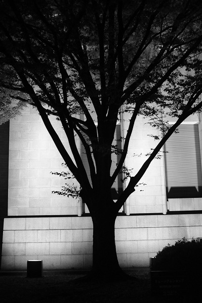 夜の散歩_f0050534_2338593.jpg