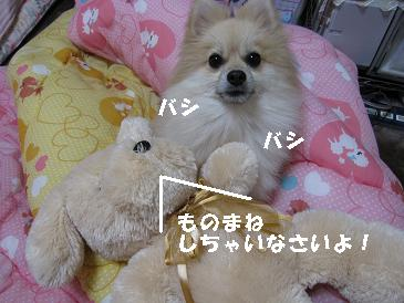 c0179136_2350126.jpg