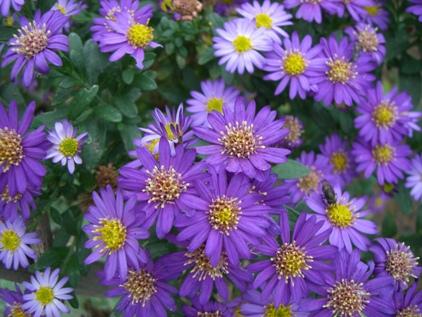マイガーデンの花ー7_f0184939_18244335.jpg