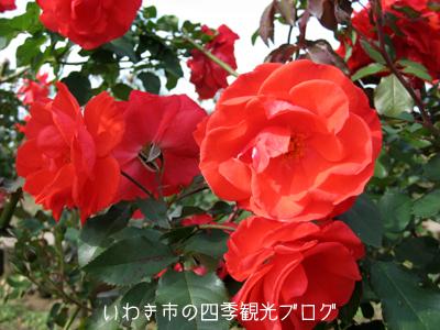 f0105342_15332826.jpg
