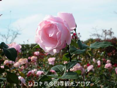 f0105342_15334040.jpg