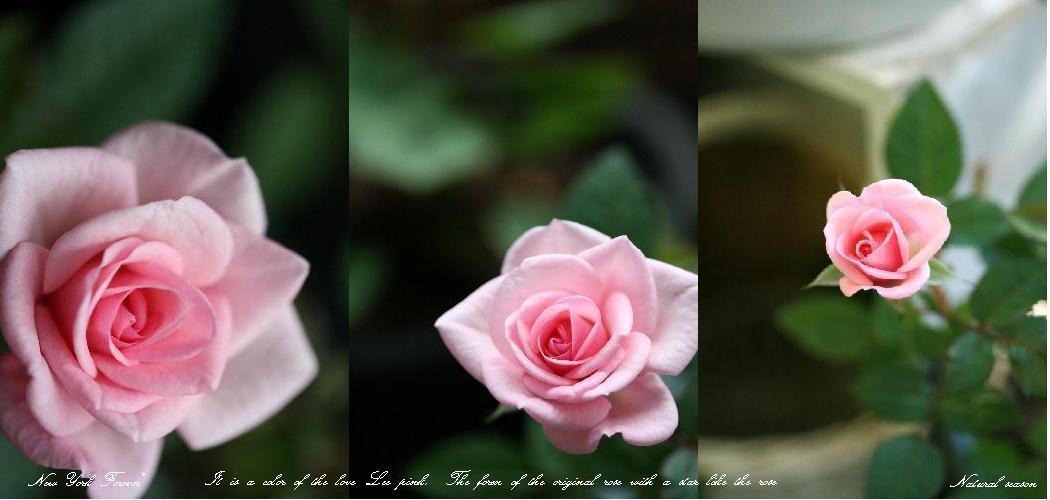 f0168375_18354323.jpg