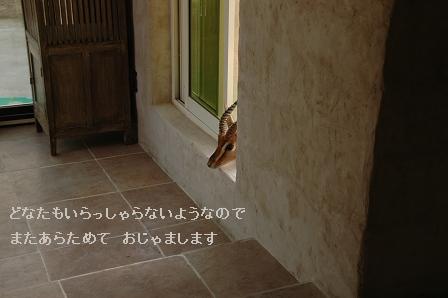 e0146990_0263631.jpg