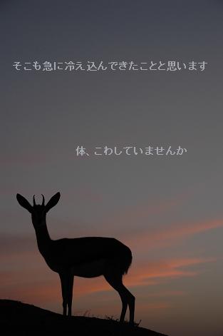 e0146990_0314323.jpg