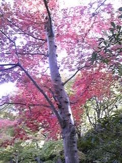 京都その2_f0017897_20191354.jpg