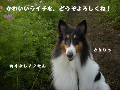 f0081100_15332377.jpg
