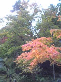 秋の京都_d0085018_19513558.jpg