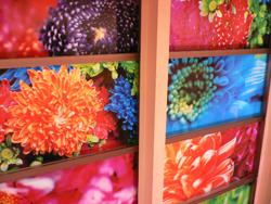 2008年10月31日 蜷川実花 展 ─ 地上の花、天上の色 ─ _c0103430_0364182.jpg