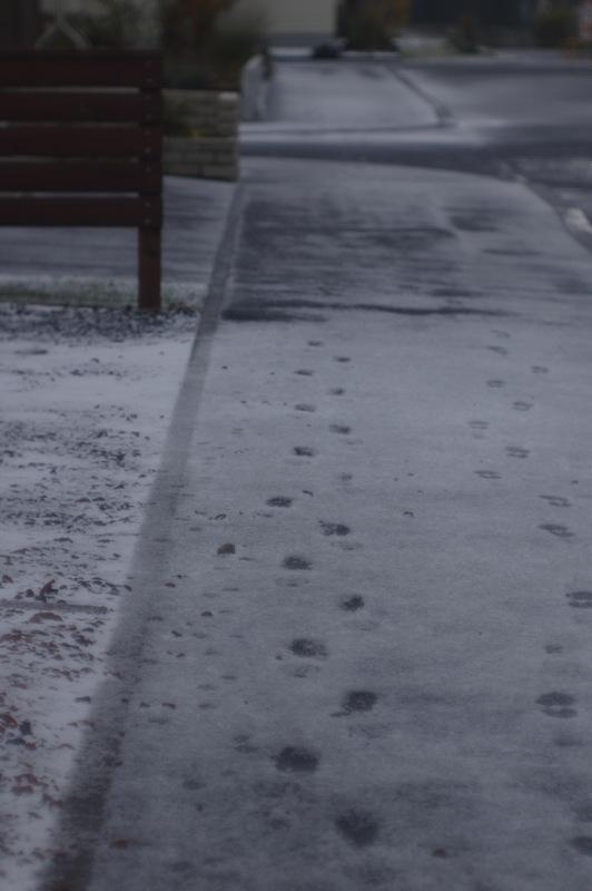 初雪の朝_f0042194_8411294.jpg