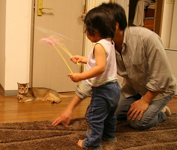 プチ猫じゃらマスター_a0009397_23113552.jpg
