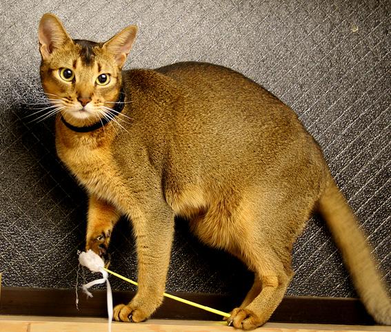 プチ猫じゃらマスター_a0009397_23152586.jpg