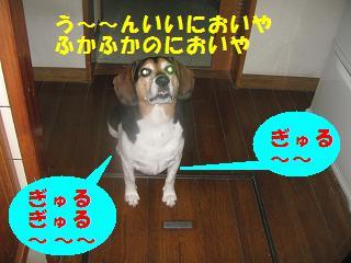 d0104209_18511224.jpg
