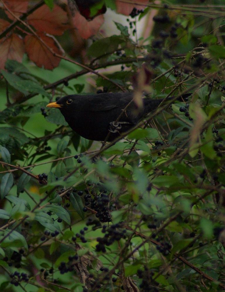 野鳥撮影の季節にはなったけれど_b0148617_19394592.jpg