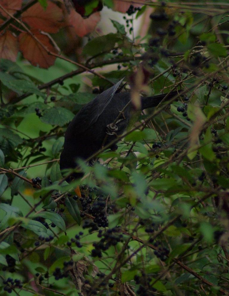 野鳥撮影の季節にはなったけれど_b0148617_1939872.jpg