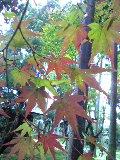 秋の京都_d0085018_1582458.jpg