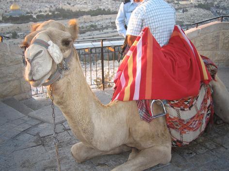 Day5:教授と再会、エルサレム観光_d0026830_2154445.jpg