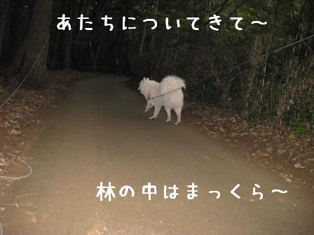 b0149735_151339100.jpg