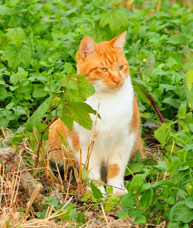 イキイキした猫ちゃん_e0157647_22162634.jpg