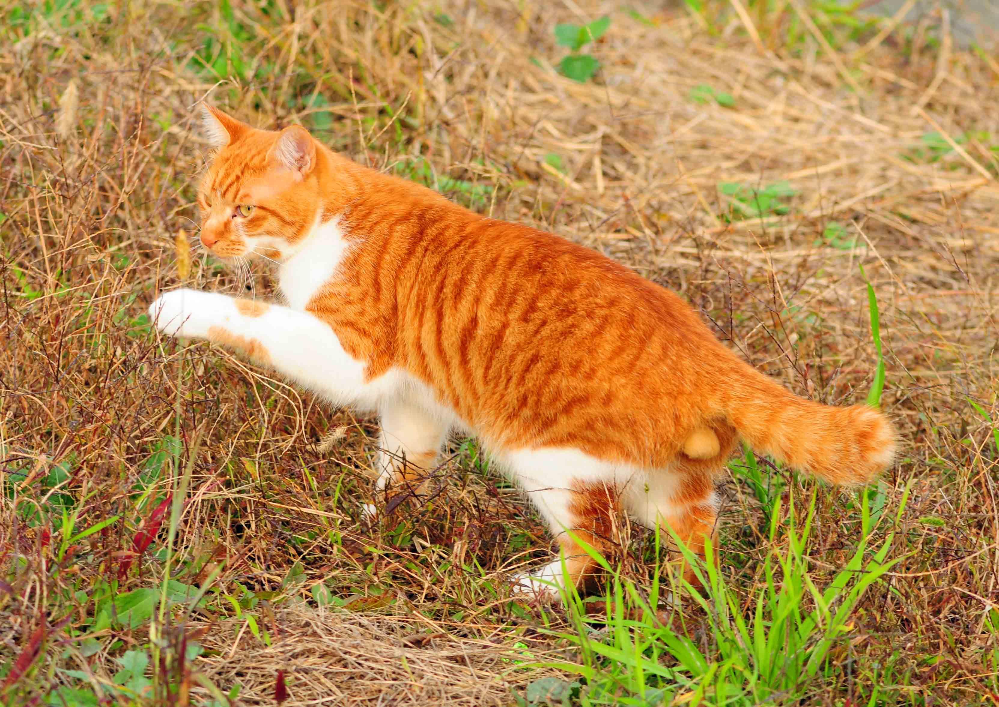 イキイキした猫ちゃん_e0157647_22165810.jpg