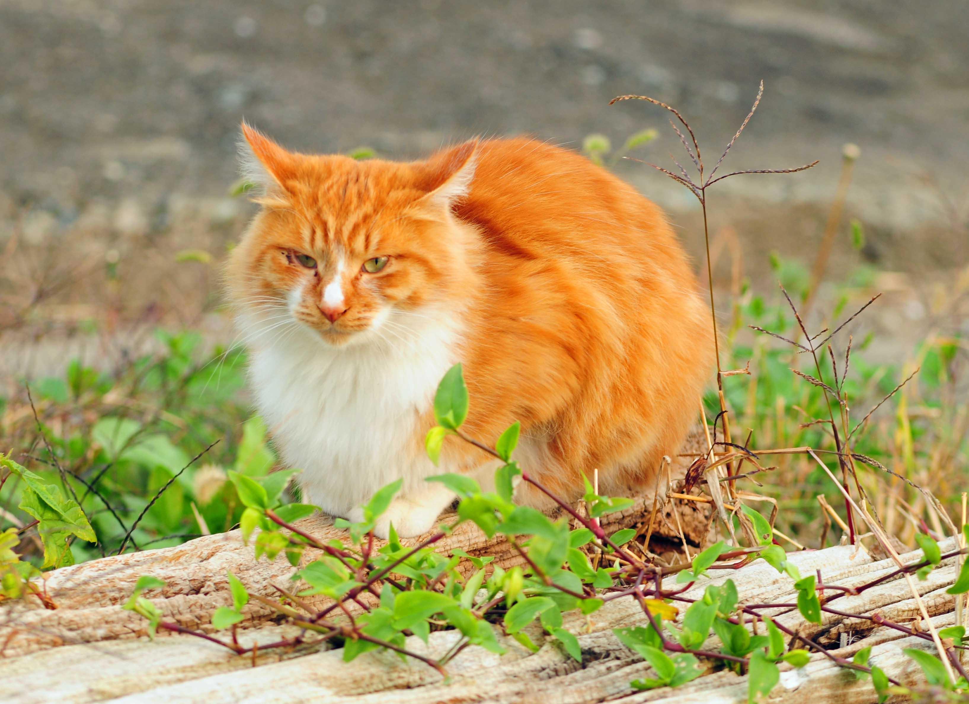 イキイキした猫ちゃん_e0157647_2216916.jpg