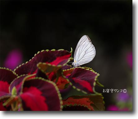 f0111147_8235962.jpg