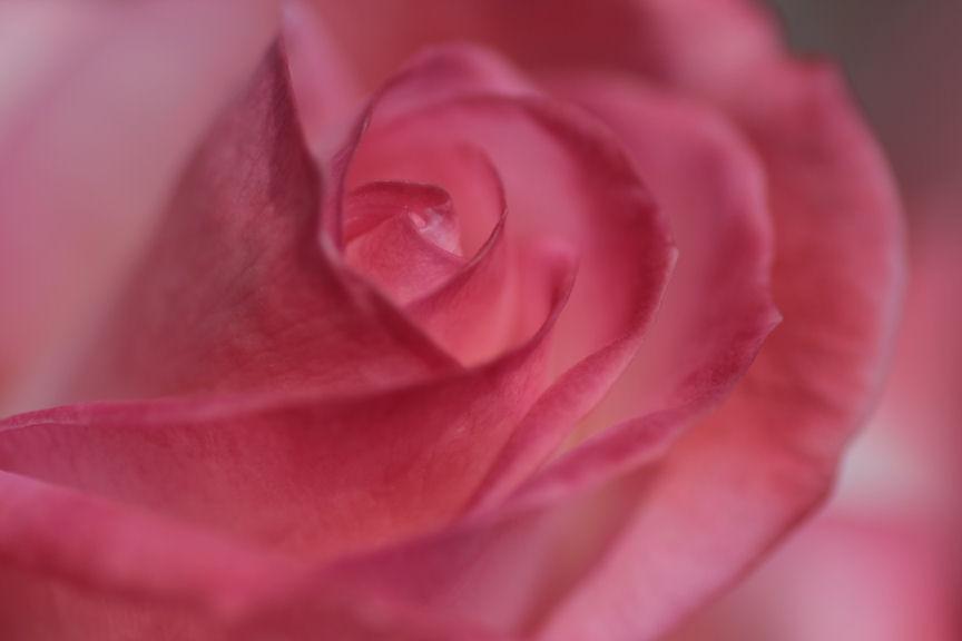 バラの花_f0195893_18201094.jpg