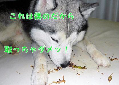 f0112407_22465591.jpg