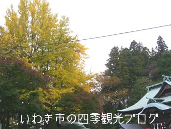 f0105342_16354851.jpg
