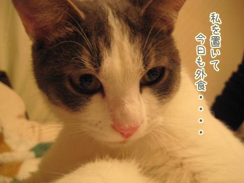 f0184675_20141022.jpg