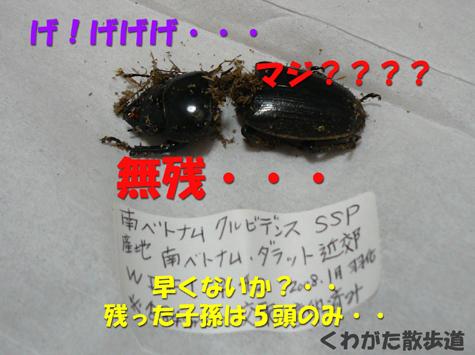 f0183484_191242.jpg