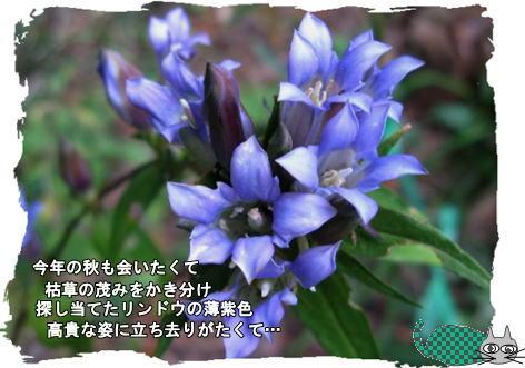 f0137096_14511810.jpg