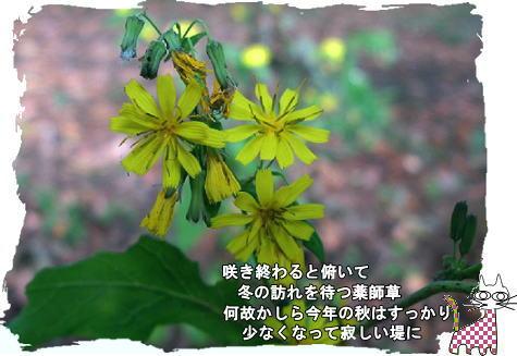 f0137096_14565282.jpg